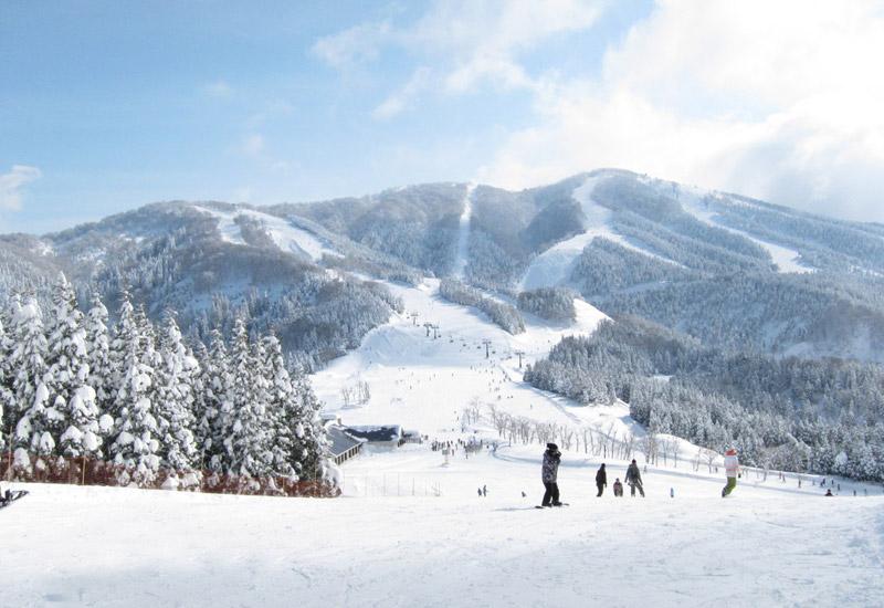 福井県勝山市にあり、西日本最大級を自称する「スキージャム勝山」